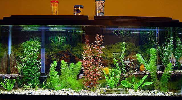 Pictures of our tanks to give ideas to everyone.